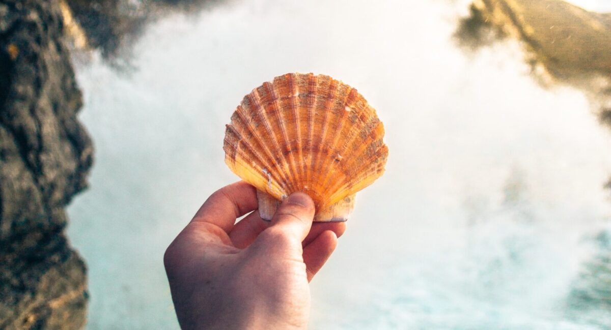 Picture of a hand holding a seashell